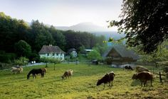 Welcome|Swiss open-air museum Ballenberg