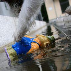 heididahlsveen:  #atsjoo is rescuing his #toy part1 #puppy #dog #hund #valp #water