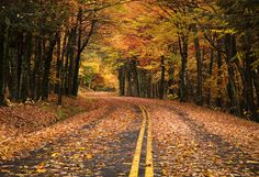 Remember this from a few months ago? This looks like the perfect route for a Fall drive.