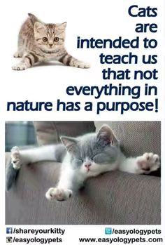 """#Cats are intended to teach us that not everything in nature has a purpose!"""""""