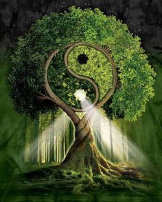 The tree of Yin-Yang symbolizes Life itself. It is the Ultimate Tree of Life. Tree Of Life, Sacred Geometry, Mother Earth, Mother Nature, Feng Shui, Magick, Fantasy Art, Fantasy Trees, Peace
