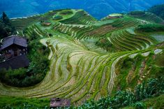 The Longsheng Rice Terraces are located in Longsheng County, about 100 km from Guilin, Guangxi, China. The most popular are Ping An Rice Terrace and Jinkeng Rice Terrace.