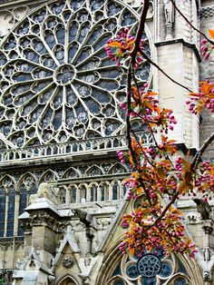 Rose Window, Cathedrale Norte-Dame, Paris