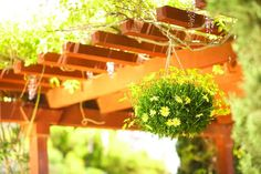14 Plants That Will Save Water In Your Garden | The Home Depot Community