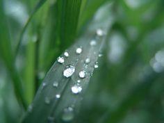 lucijee Plant Leaves, Explore, Plants, Pictures, Photos, Plant, Grimm, Planets, Exploring