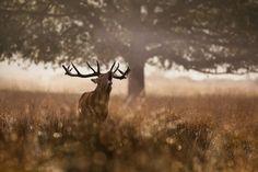 deer20