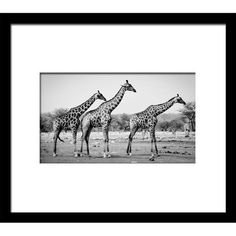 Photo Encadrée Design Girafes