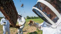 Les abeilles sous haute surveillance