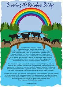 photo relating to Rainbow Bridge Poem Printable Version named RAINBOW BRIDGE POEM