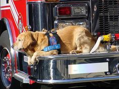 World Trade Center Heroes | Silent Heroes Remembered: 9-11 WTC Search & Rescue Dogs | PawshPal.com ...