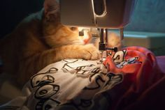 Pretty sure this is what Tuna thinks she's doing with @Viva Hernandez Hernandez Hodel when the quilting goes down.