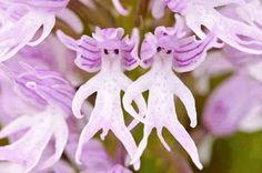 Başka canlı ve nesnelere benzeyen çiçekler