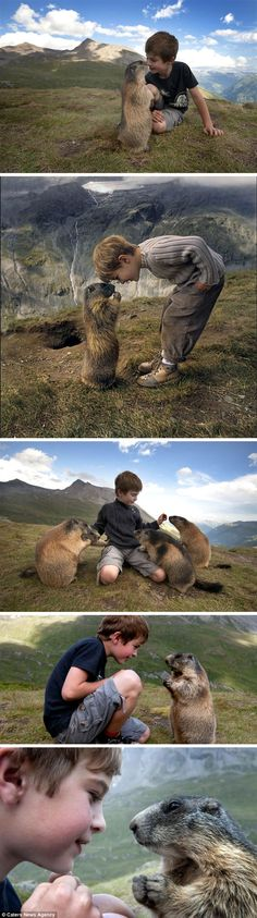 Amazing Friendship between Matteo Walch, a 10-year-old boy from Austria and a Marmot.