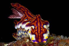 Asia Pacific: Top 20 Iconic Dives