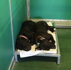 Two Dogs In A Shelter Found Snuggling Together Shelter Dogs, Rescue Dogs, Shelters, Perros Pit Bull, Two Dogs, Puppy Mills, Four Legged, Snuggles, Pet Adoption