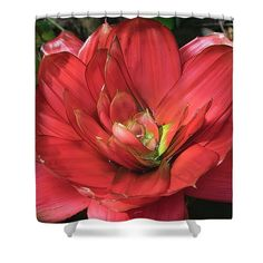 Color of Love Shower Curtain by Portia Olaughlin Life is the flower for which love is the honey. - Victor Hugo Red Bromelia found in south Florida gardens. #redflower #coloroflove #redart #flowerart Amazing Street Art, Red Art, Victor Hugo, Finding Joy, South Florida, Red Flowers, Flower Art, Favorite Color, Graffiti