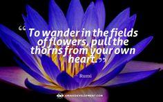 Wonder in the Fields of Flowers -
