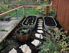 Raised beds using troughs.