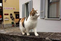 Chat à Caviano (1/25) (2013-04-01 -18)