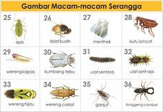 GAMBAR-JENIS & MACAM HEWAN SERANGGA
