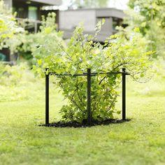Stöd för Bärbuskar Hasselfors Garden