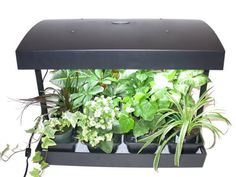 Grow Light Indoor Garden for herbs, vegetables, fruits and flowers by SunBlaster. size, 1 gallon reservoir and 2 Full spectrum High Output 24 watt Sun Blaster grow light bulbs Herb Garden Kit, Lawn And Garden, Indoor Flower Pots, Indoor Plants, Greenhouses For Sale, Best Led Grow Lights, Indoor Vegetable Gardening, Grow Light Bulbs, Growing Herbs