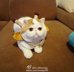 http://www.weibo.com.my/xweibo111/index.php?m=ta=2499077683