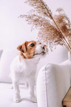 Interior 🤍 Wir sind gerade wieder dabei unsere Wohnung umzugestalten und haben uns eine schöne cremeweiße Couch geholt.  Ich bin mal gespannt wie lang sie mit Hund weiß bleibt. 🐶 Corgi, Instagram, Interior, Animals, Pet Dogs, Nice Asses, Corgis, Animales, Indoor