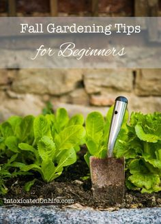 Best Gardening Ideas for Fall. #gardeningforbeginners