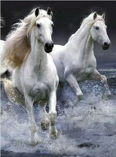 Dear friends I wanna recommend you a great club equestrianlover.com   The best, largest and most effective dating site for single horse lovers and friends in the world!it is an exclusive community for cowboys & cowgirls and equestrian singles to meet horseback riding enthusiasts, discover uncharted trails, pursue the country lifestyle, and locate the best riding areas.
