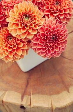I love the dahlia, what a beautiful flower