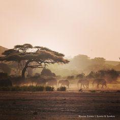 Quintessential Kenya - dust, elephants and beautiful light. Amboseli National Park #glampinginafrica #lowisandleakey #guidedbyninian