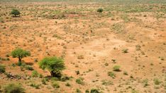 Stock Footage of A static timelapse shooting down on a barren bushveld landscape during a drought with scattered Baobabs and a few green shrubs, midday. Explore similar videos at Adobe Stock Stock Video, Stock Footage, Shrubs, Country Roads, Trees, African, Explore, Landscape, Adobe