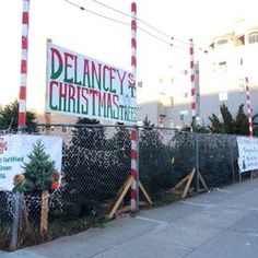 Delancey Street Christmas Trees.197 Best Christmas Tree Lots Farms Images In 2019