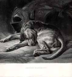 Sleeping Bloodhound. Sir Edwin Landseer, engraved by Chas G.Lewis, circa 1860.