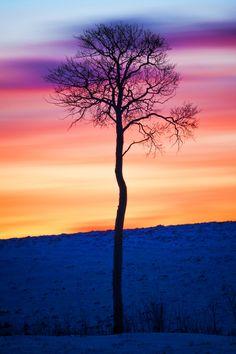 ponderation:  The Lone Aspen by Stefan Olson