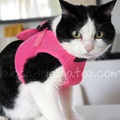 Arnés para gato soft con correa en la tienda de mascotas de la Loca de los Gatos
