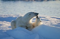 """New survey: IMAX """"To the Arctic"""" is having an impact, inspiring action on climate change."""