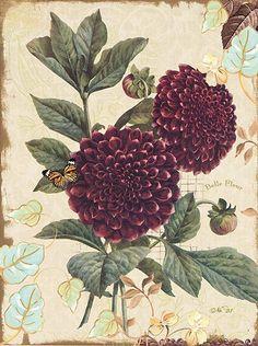 Natures.Flora.-.04.of.05.-.Terry.Conrad