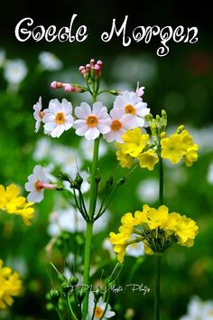 Flowers, Plants, Photography, Nice, Art, Fotografie, Craft Art, Kunst, Fotografia