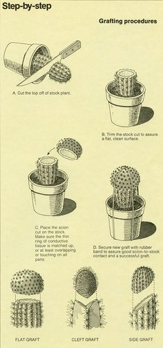 The World of Cactus  Succulents (1977) B-D