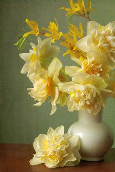 daffodils and forsythia, picked and photographed by Dianne Sherrill--ABSOLUTELY gorgeous still life photo (Flickr)