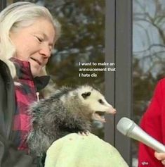 Animal Themed Memes That Will Surely Make You Laugh Pictures) - LADnow Dankest Memes, Funny Memes, Hilarious, Jokes, Reaction Pictures, Funny Pictures, Gavin Memes, Funny Animals, Cute Animals
