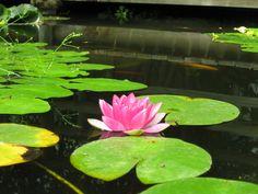 Bassin d'ornement et fleurs
