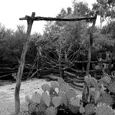 DeGrazia's web sculptures, circa 1960s. Happy Throwback Thursday! DeGrazia Gallery in the Sun open daily from 10-4; free admission. #NationalHistoricDistrict #DeGrazia #Artist #Ettore #Ted #GalleryInTheSun #ArtGallery #Gallery #Adobe #Architecture #Tucson #Arizona #AZ #Catalinas #Desert #Spider #Webs #Sculptures #Throwback #Thursday #TBT #teddegrazia #galleryinthesun #degrazia
