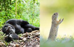 Vahşi Yaşam Fotoğrafçılığının Oldukça Eğlenceli Olabileceğini Gösteren 24 Komik Fotoğraf