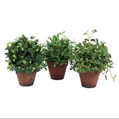"""8 4"""" Potted Ivy - Google Search"""