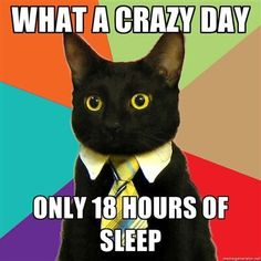 Can't get enough cat memes? Check out these hilarious, cute and silly cat memes we collected who show the best (and weirdest) cat traits that make these kitties our favorite fur-balls. Funny Cats, Funny Animals, Cute Animals, Cats Humor, Humor Humour, Funny Stuff, Funniest Animals, Funny Things, Pets