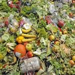 5 Ways We Can Stop Food Waste 100 things to compost!