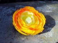 CLIP CORSAGE PINCE CHEVEUX FLEURON RENONCULE orange  fleurs artificielles
